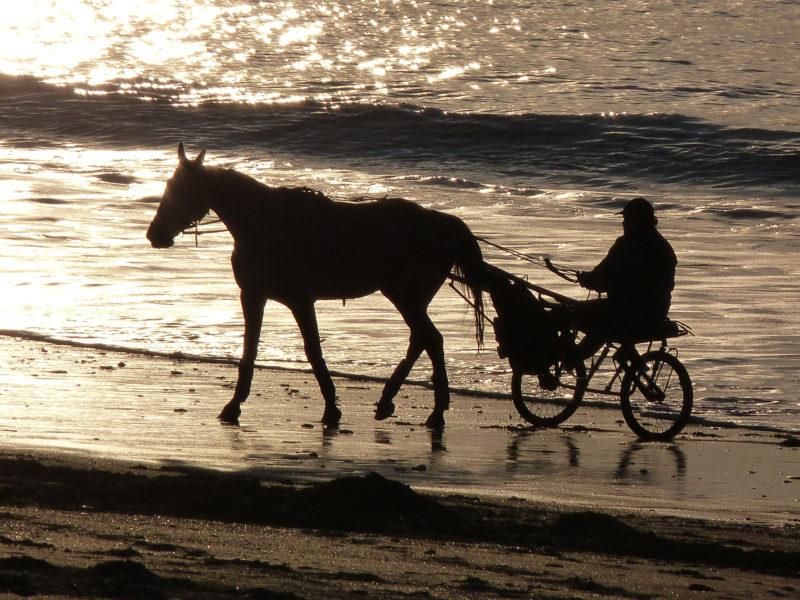 Horse riding: on the beach, along the paths of the groves or in a club, discover the Cotentin on horseback.