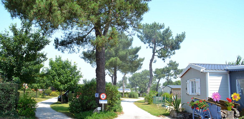 The La Plage de Fermanville Camping site - Camping de Fermanville (35)