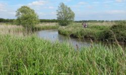 The Natural Parc of the Cotentin Marshlands