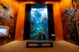 aquarium océan futur cité de la mer cherbourg@B.Almodovar